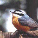 birdcopy225